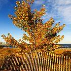 Sheldon Marsh - Autumn Beach by SRowe Art