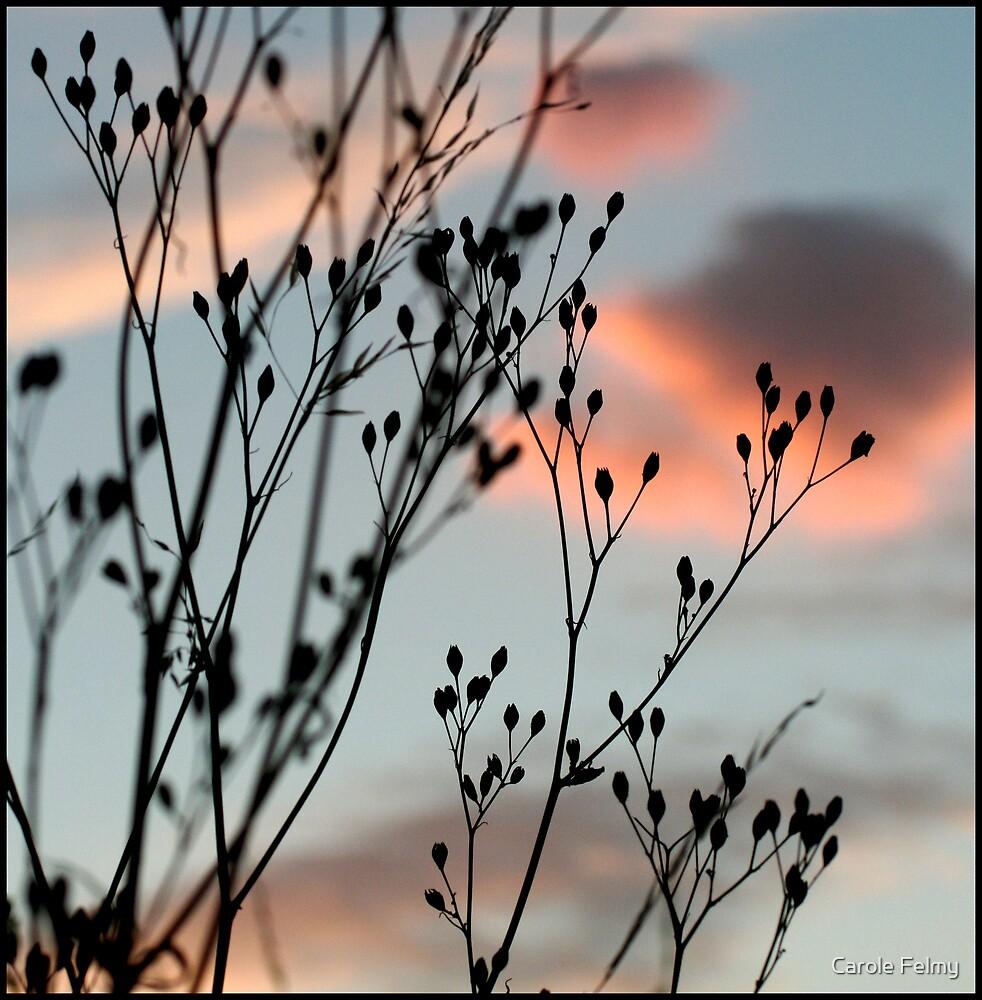 Delicates by Carole Felmy