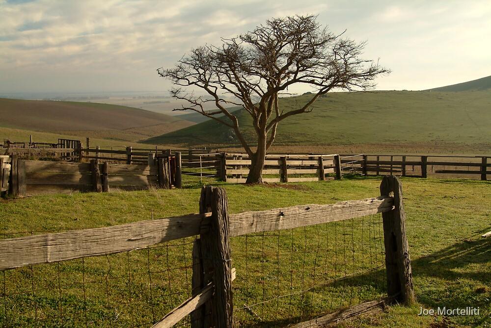 Barrabool Hills Cattle Yard by Joe Mortelliti