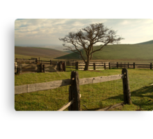 Barrabool Hills Cattle Yard Canvas Print