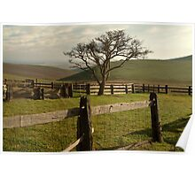 Barrabool Hills Cattle Yard Poster