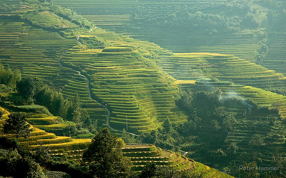 Terraced Hillsides by Peter Hammer