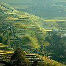 Terraced Hillsides by Peter Hammer