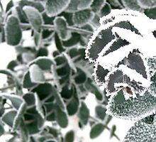 Frosty by ElinaM