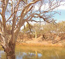 Darling River Sentinal by Alan Lazarus