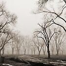 Into the Fog by narrowpathphoto