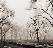 Into the Fog by narrowpathphoto