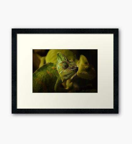 Funny pair of the chameleons. Amusing animal glance Framed Print