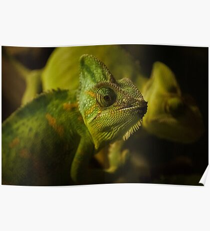 Funny pair of the chameleons. Amusing animal glance Poster