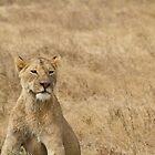 Lioness by Samantha Rubin