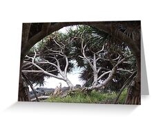 Pandanus on Pandanus Greeting Card