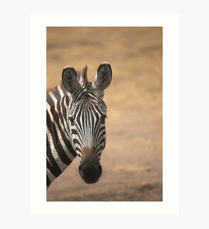 Zebra - Masai Mara, Kenya Art Print