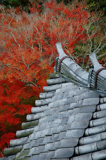 Roof over the red forest by Stephen Colquitt