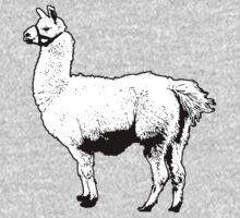Llama by justinwregier