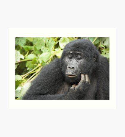 Female Highland Gorilla, Uganda Art Print