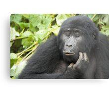 Female Highland Gorilla, Uganda Metal Print