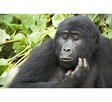 Female Highland Gorilla, Uganda Photographic Print