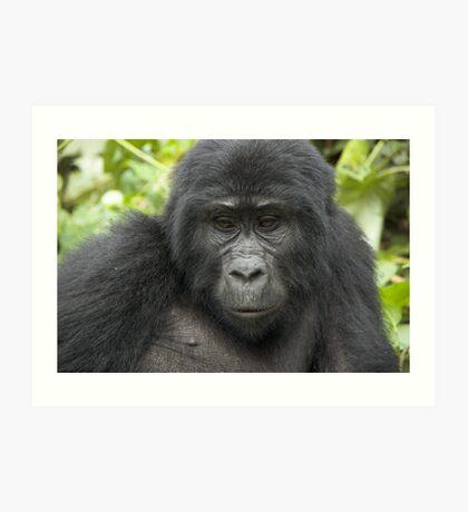 Juvenile Highland Gorilla 2, Uganda Art Print