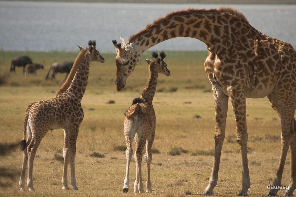Giraffe Family by dawesy
