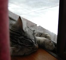Windowsill nap by Sandra Chung