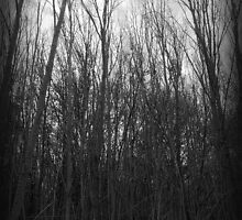 STORMY THICKET by louise
