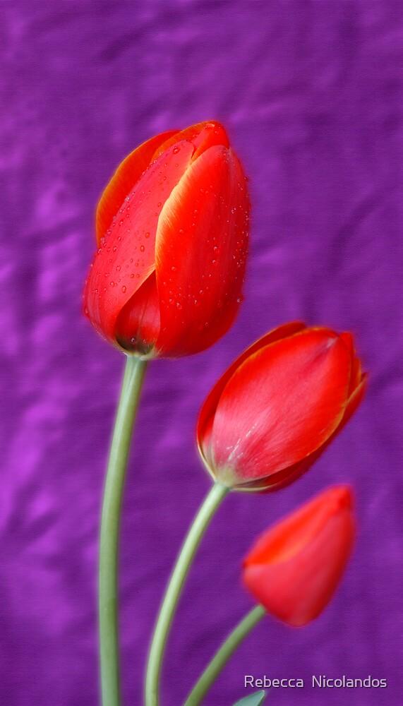 Three tulips by Rebecca  Nicolandos