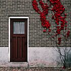Red Door by niq702