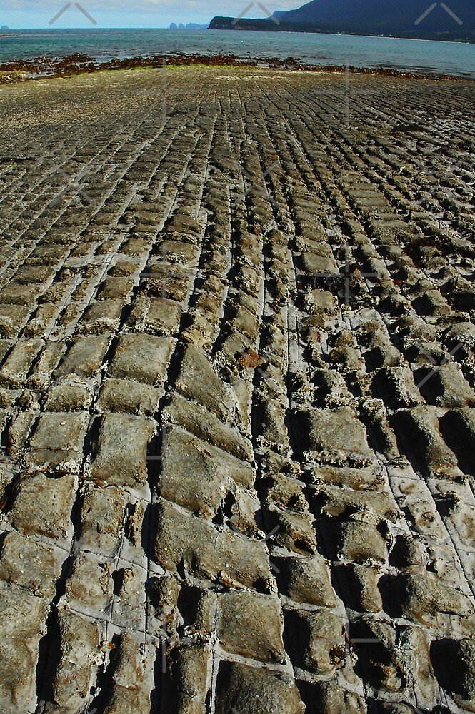 Tesselated Pavement, Tasman Peninsula, Tasmania by Caro