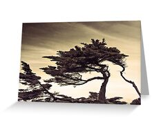 autechre trees Greeting Card