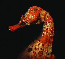 Red Seahorse by Grey