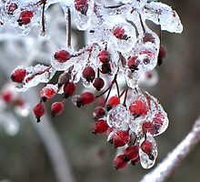 Ice Berries by Rusty Katchmer