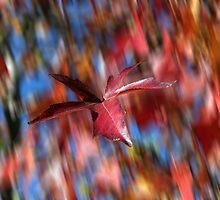 Falling... by Lee Burgess