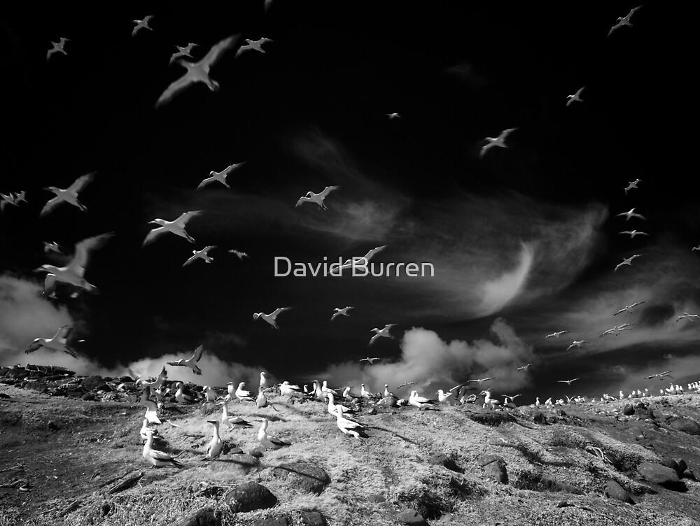 Ghost birds by David Burren
