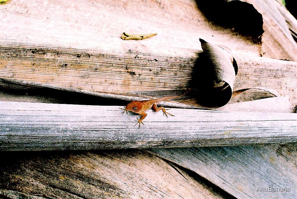 salamandra by AnaBanana