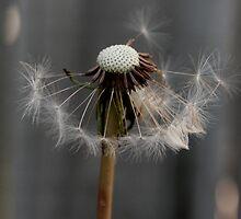 Make A Wish by Ellen Woods