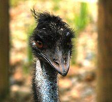 Emu by Ozmoe