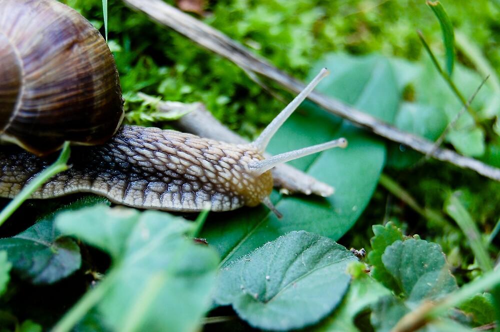 slug by venkman