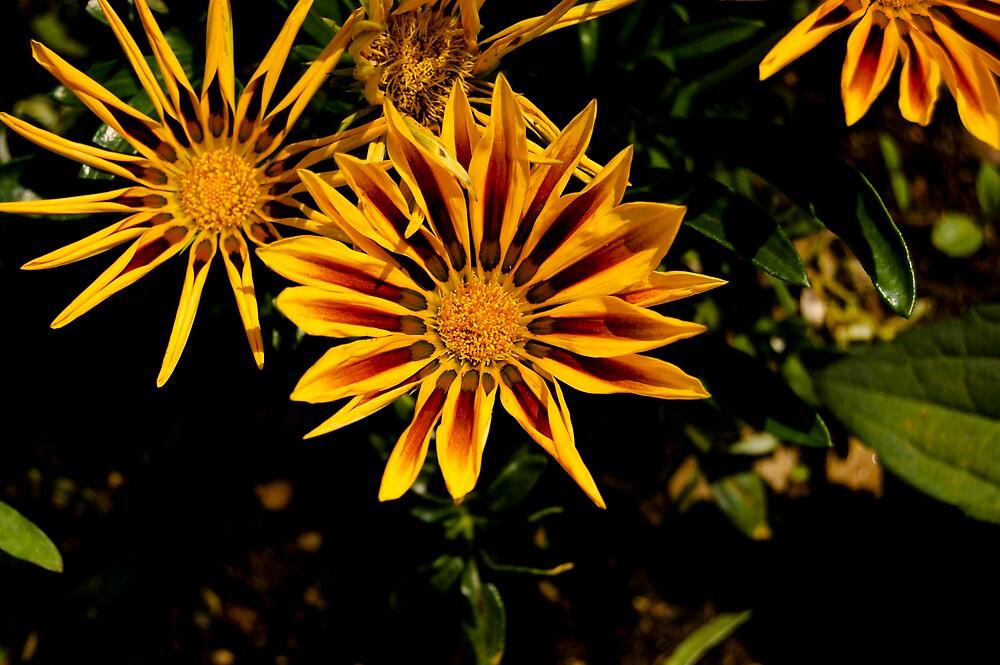 fire flower by venkman