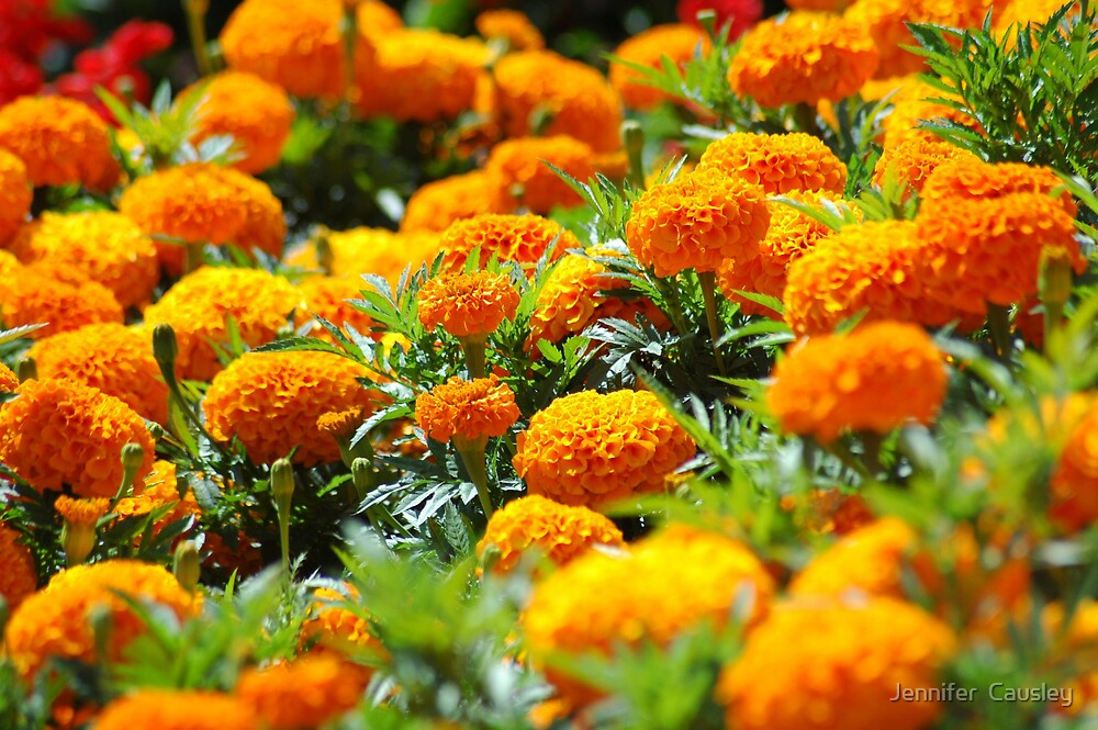 Yellow Flowers by Jennifer  Causley