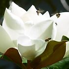 Magnolia Flower with bees by skyb