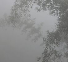 Bamboo in the mist by skyb