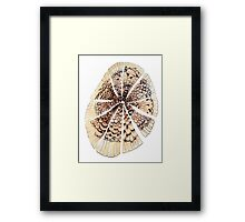 feather pulse Framed Print