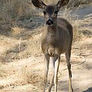Watchful Doe  by Maurine Huang