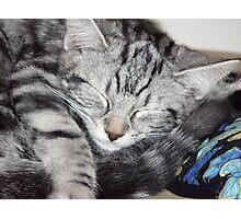 Kitten Close up, sleeping Photographic Print
