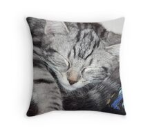 Kitten Close up, sleeping Throw Pillow