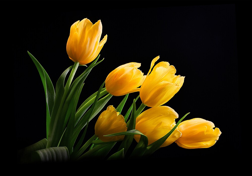 Yellow Tulips by Jenni Horsnell