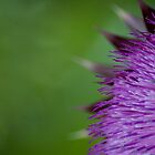 Purple Flower by rudavis