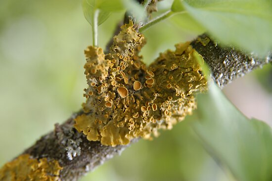 nice parasite mushroom on tree by venkman