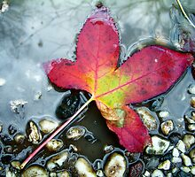 RED LEAF by Naomi-Anne Lovell