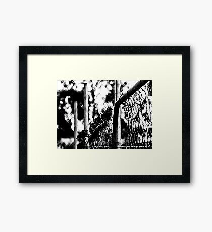 Sparrow Fence Framed Print